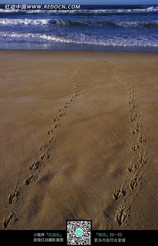海边沙滩上留下的动物脚印特写照片