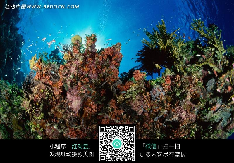 深蓝的海底里美丽的珊瑚群_海洋海边图片_编号774941图片