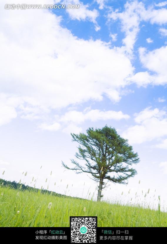 蓝天白云下的草地和树木
