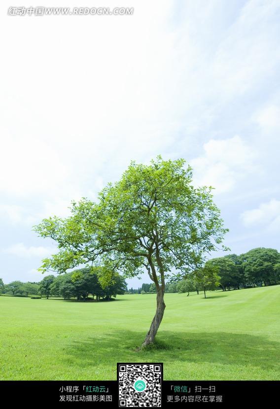 免费素材 图片素材 自然风光 自然风景 绿草地上耸立的一颗颗树  请您