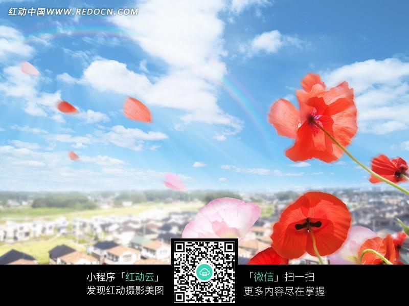 蓝天下飘舞的花瓣JPG素材图片免费下载 红动网图片
