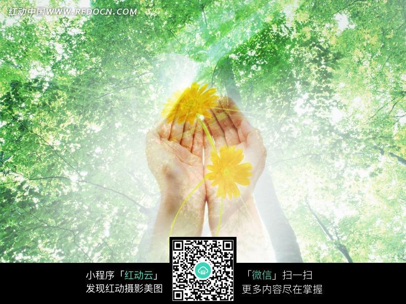 树林和捧着黄色花朵的手图片_自然风景图片