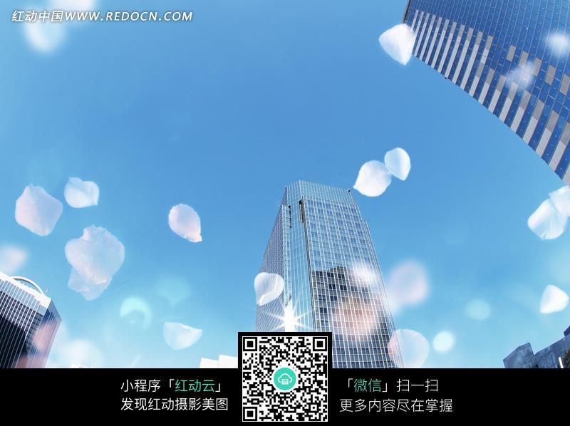 高�:--y�d��n�yja_高大的楼房和纷飞的花瓣图片