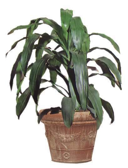 室内长叶型植物盆栽psd设计素材