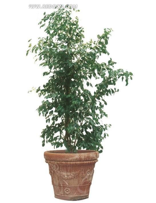 室内植物盆栽psd设计素材