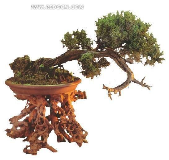 送客根雕花盆松盆景图片