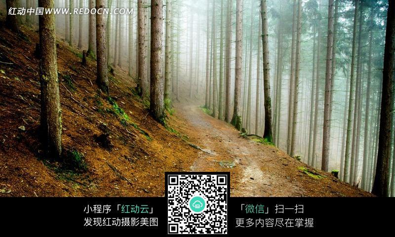 免费素材 图片素材 自然风光 自然风景 林间小路