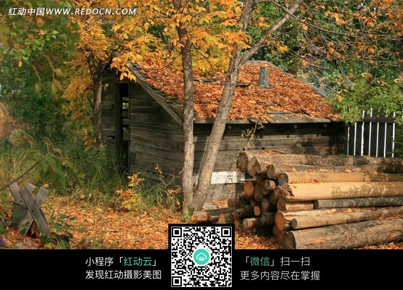 林间满屋顶落叶的小木屋图片_自然风景图片