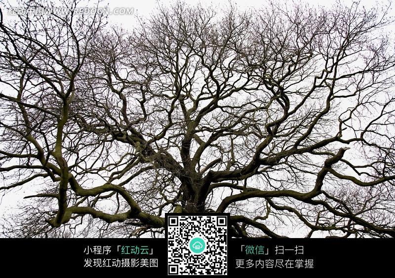 树枝繁茂叶子落光的大树