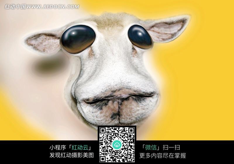 眼睛变形的白色的动物