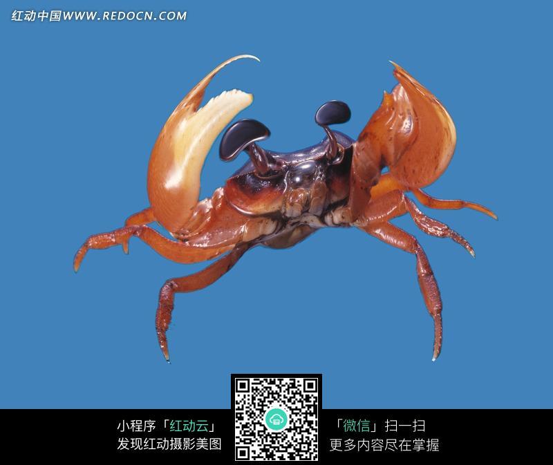 放大眼睛的螃蟹图片_陆地动物图片