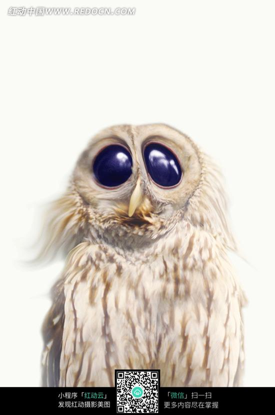 动物搞笑图片大眼睛猫头鹰