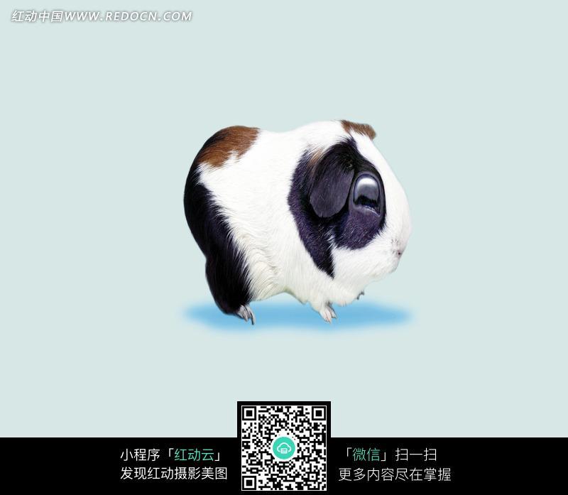 动物搞笑图片兔子变扁的运势2018属身体每月仓鼠图片