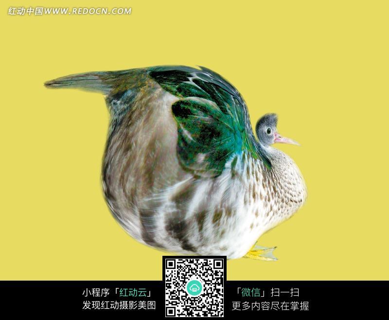 动物搞笑图片身体扭曲的大鸟