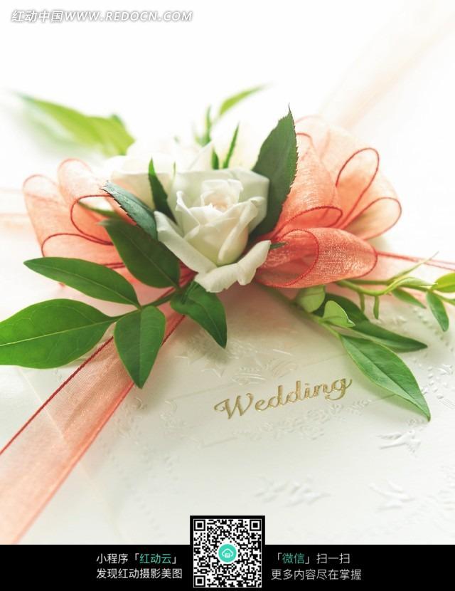 粉色的丝带花上的绿叶和白色花朵图片