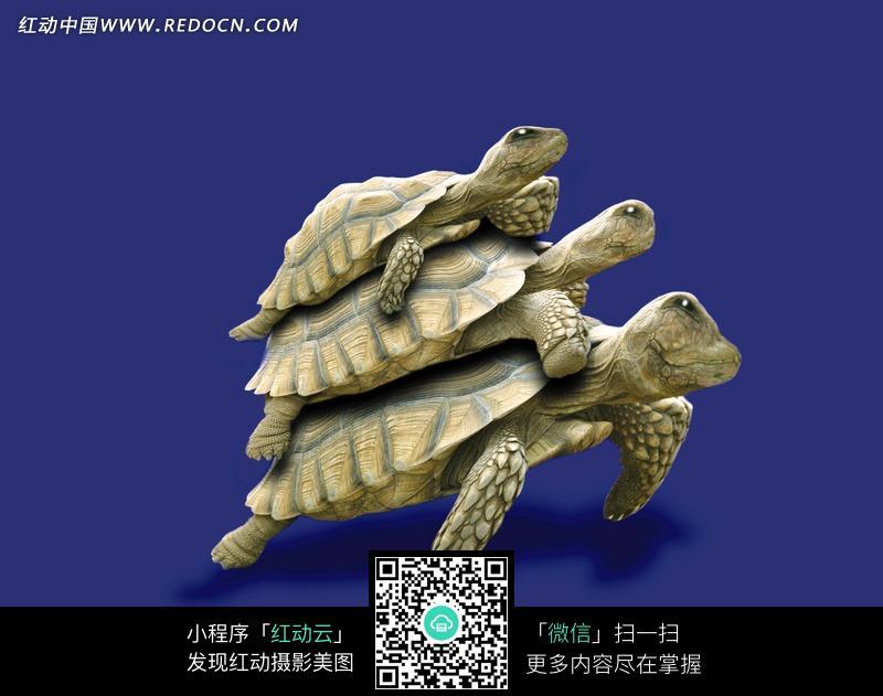 三只摞在一起的乌龟图片_陆地动物图片