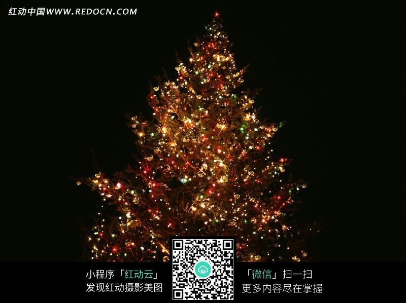 绿色圣诞树上的彩灯图片