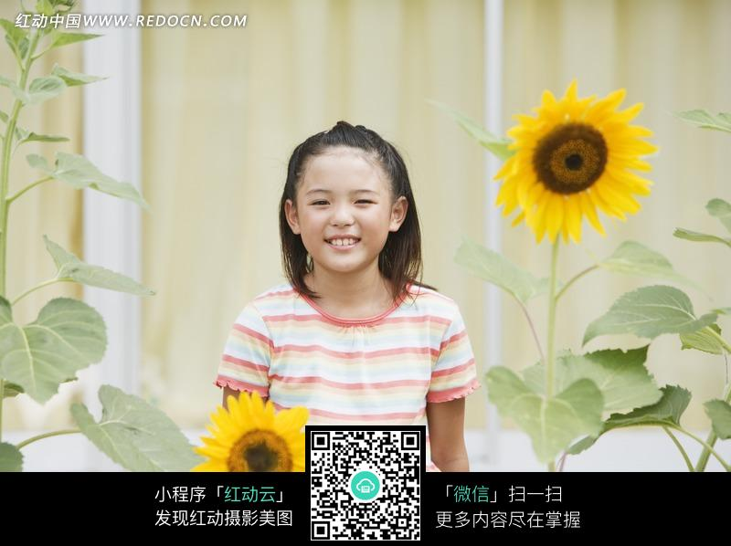 站在向日葵花中间的女孩图片