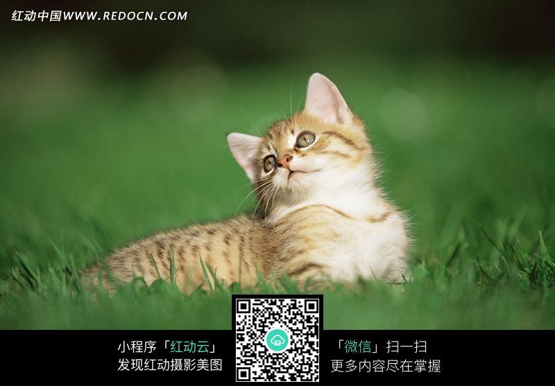 草地上的可爱小猫图片
