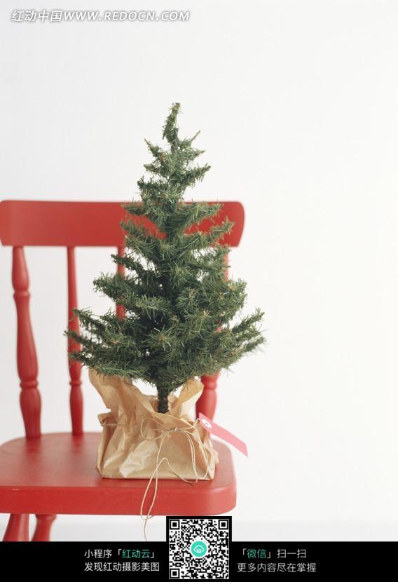 经色椅子上的一棵小松树图片