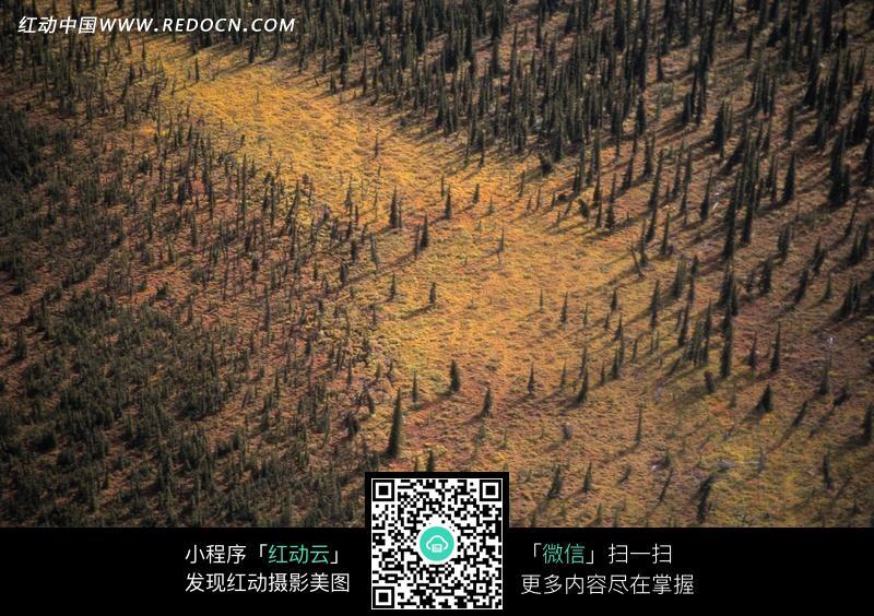 高空俯视被摧毁的森林图片