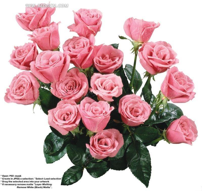 一束粉红色玫瑰花psd素材图片