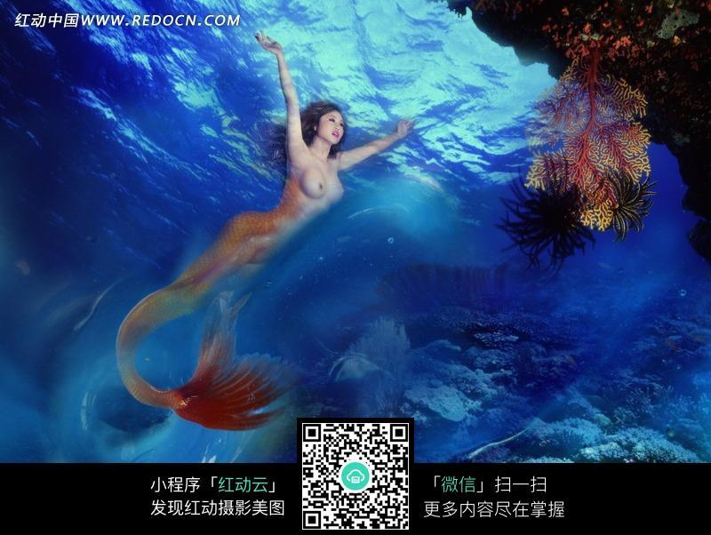 海底游泳的美人鱼图片图片