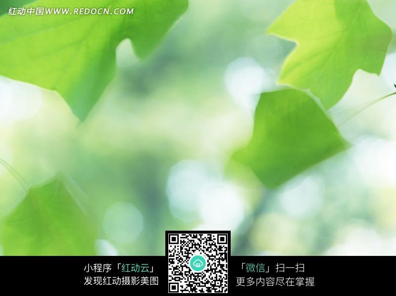 绿色叶子和光晕构成的图片_花草树木图片