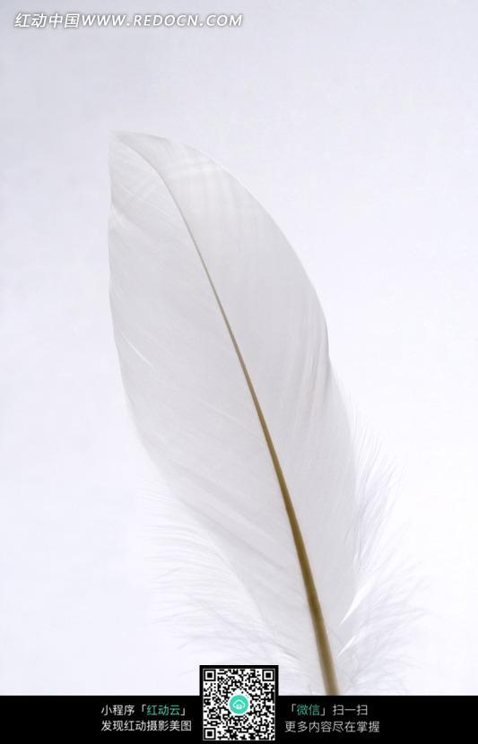 纯白色羽毛图片图片 生活用品图片