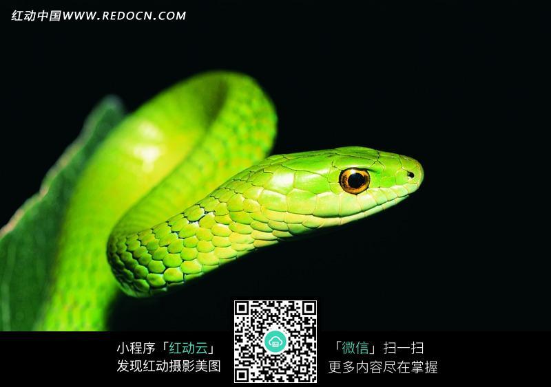 请您分享: 素材描述:红动网提供陆地动物精美素材免费下载,您当前