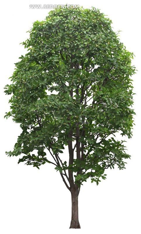 发型设计 何承熹整容前照片小树烫发 > 小树_微蓝_新浪博客  小树图片