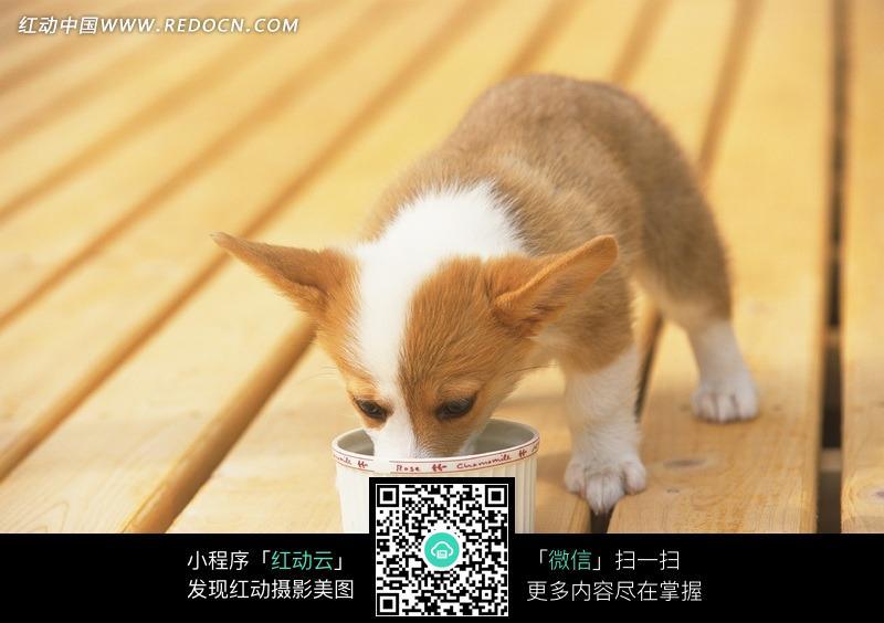 地板上在狗盆里吃食物的小狗_陆地动物图片