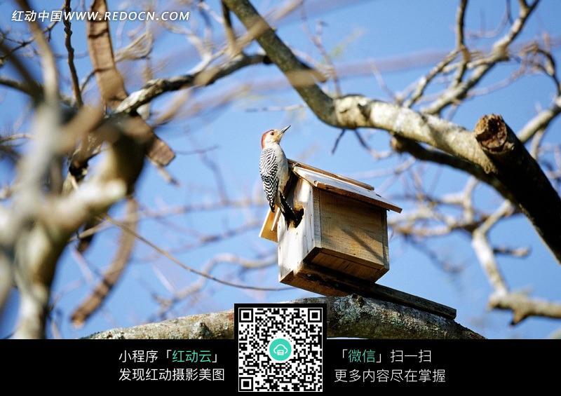 树枝上的小房子和小鸟