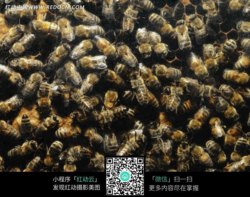 免费素材 图片素材 生物世界 陆地动物 蜂巢上密密麻麻的蜜蜂  请您分
