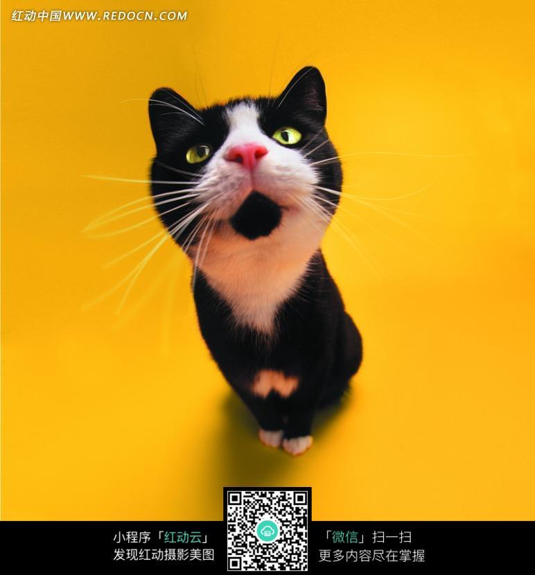 一只小黑猫图片