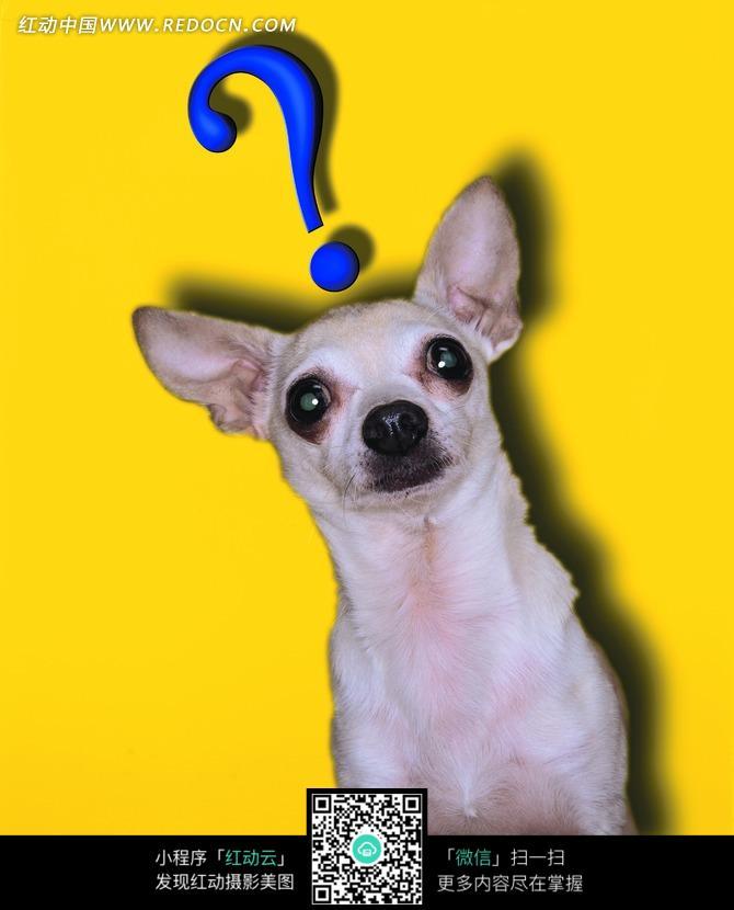 头顶问号的宠物狗图片_陆地动物图片