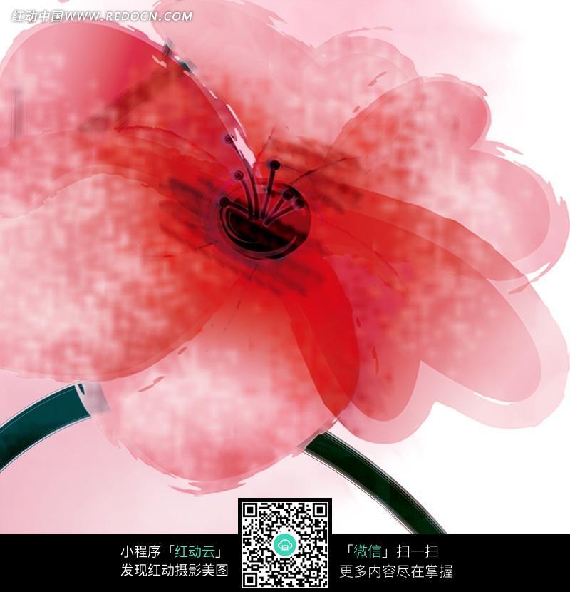 水彩风格红花手绘稿