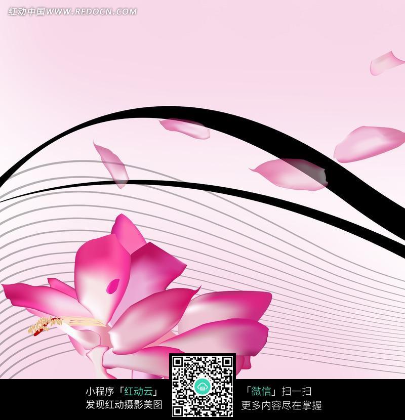 花朵线条图片素材图片