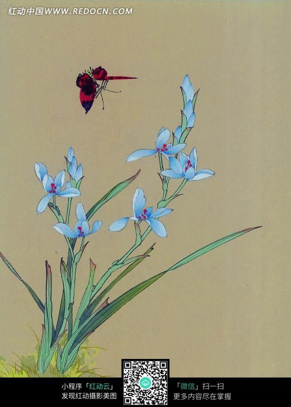 中国工笔花鸟 翩跹的蝴蝶和蓝色兰花