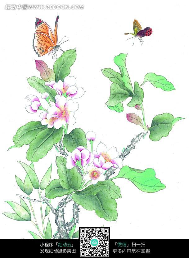 中国工笔花鸟 粉色花朵和蝴蝶图片免费下载 编号860477 红动网