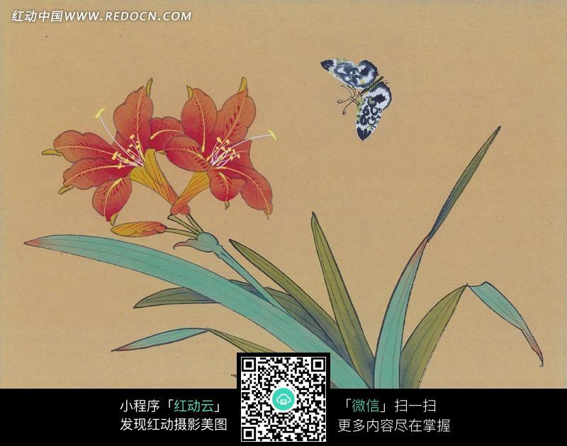 中国工笔花鸟 红色花朵和蝴蝶图片
