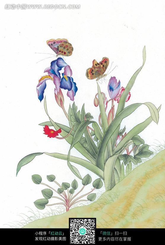 中国工笔花鸟 鸢尾和蝴蝶图片免费下载 红动网