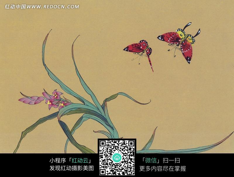 中国工笔花鸟 蝴蝶和兰花图片免费下载 红动网