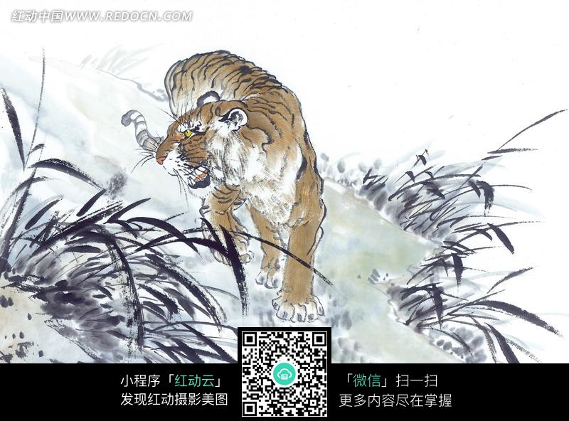 爬行的老虎图片