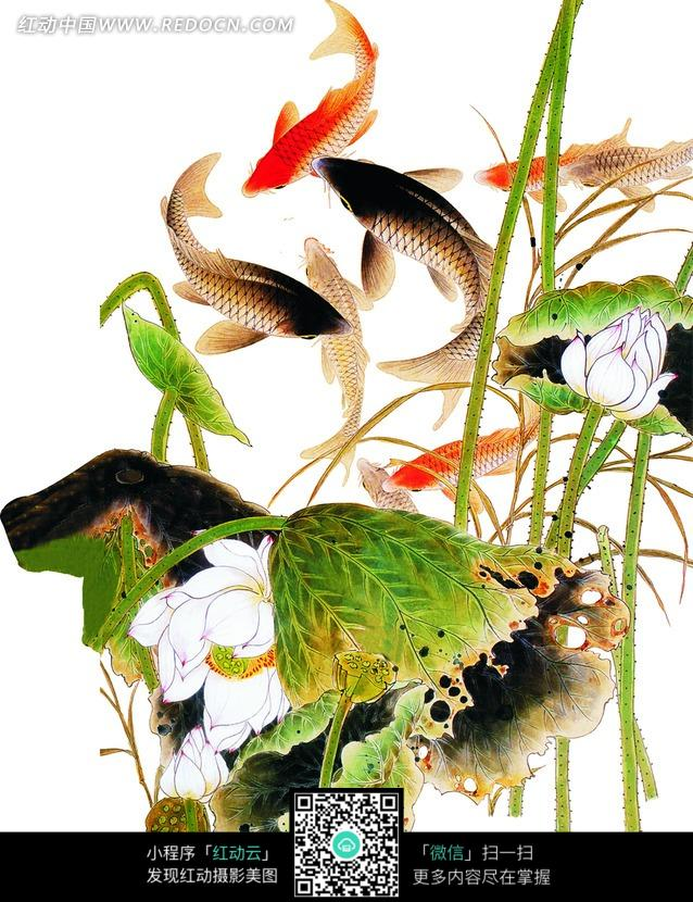 鱼戏莲叶间中国古典画作图片