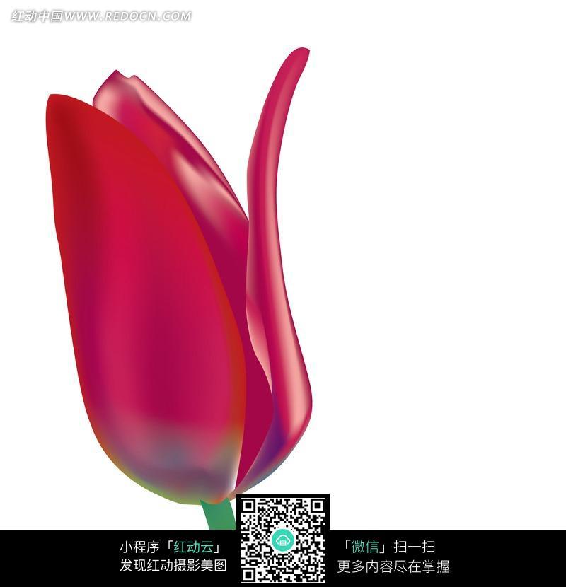 抽象的红色郁金香花朵图片
