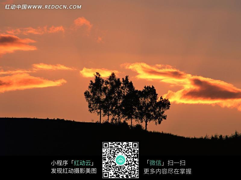 云彩下的树木图片