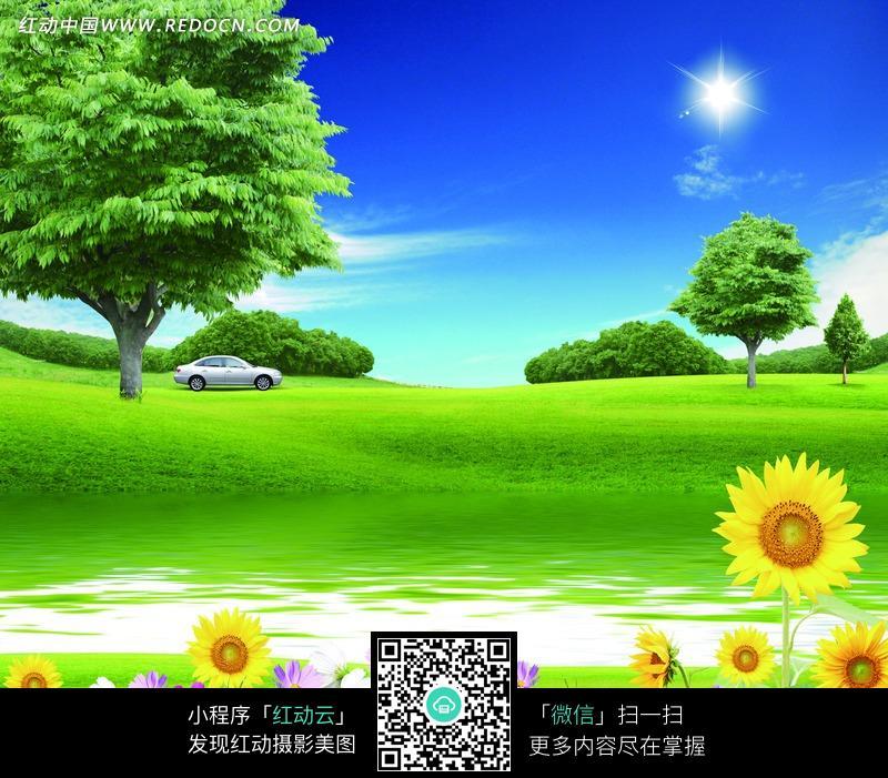 阳光照耀的草地和野花图片