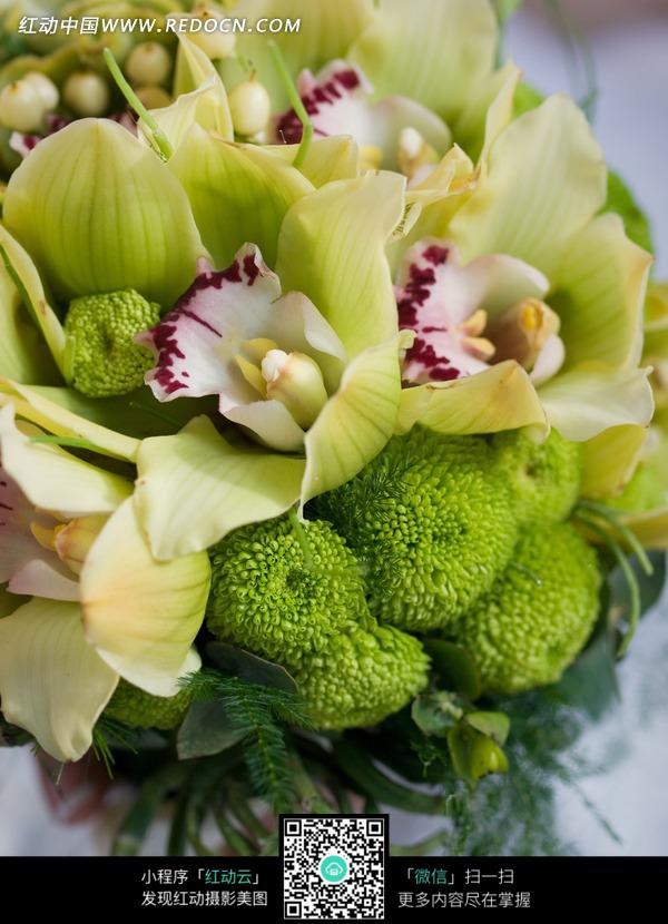 新娘鲜花花束图片_花草树木图片