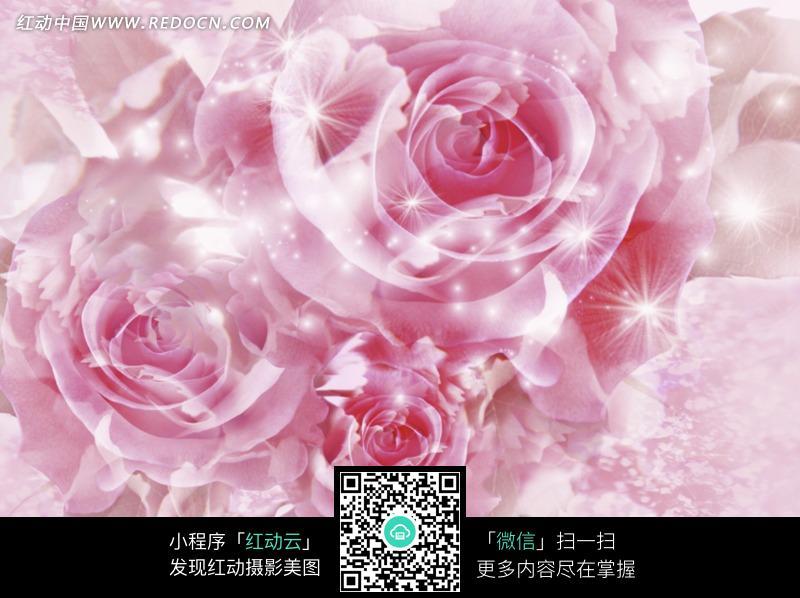 朦胧背景下的紫色玫瑰花朵图片